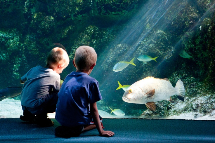 Children at aquarium of La Rochelle